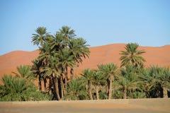 Palmen in de woestijn van Afrika op zand Royalty-vrije Stock Afbeeldingen