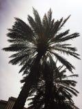 Palmen in de zon stock fotografie
