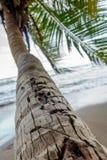 Palmen in de zon royalty-vrije stock afbeeldingen