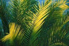 Palmen in de zonsondergang Royalty-vrije Stock Foto's