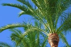 Palmen in de zonsondergang stock afbeeldingen