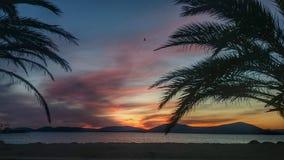 Palmen in de zonsondergang stock foto's
