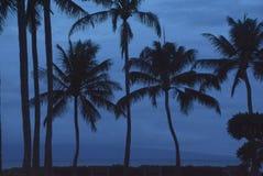 Palmen in der blauen Dämmerung stockfotos