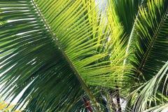 Palmen in der Brise Lizenzfreies Stockfoto