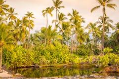 Palmen an der Lagune auf großer Insel, Hawaii lizenzfreies stockbild