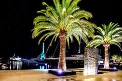 Palmen in der Nacht beleuchtet in Marina Porto Montenegro, Tivat lizenzfreie stockfotografie