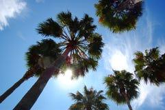 Palmen in der Sonne Stockfotos