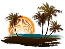 Palmen in der Sonne Stockbild