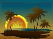 Palmen in der Sonne Stockfotografie