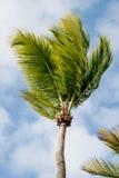 Palmen in der Sonne Lizenzfreie Stockfotos