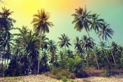 Palmen an der tropischen Küste, Weinlese getont Lizenzfreies Stockfoto