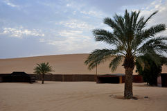 Palmen in der Wüste Stockbild