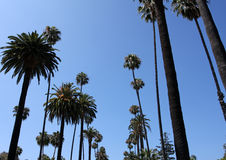Palmen dichtbij Beverly Hills Royalty-vrije Stock Foto's