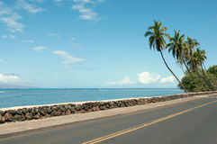 Palmen dichtbij de weg Stock Foto's