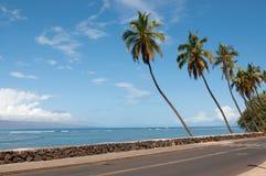 Palmen dichtbij de weg Royalty-vrije Stock Afbeeldingen