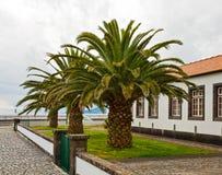 Palmen dichtbij het huis Royalty-vrije Stock Afbeelding