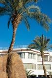 Palmen dichtbij plattelandshuisjes in de zomer Royalty-vrije Stock Fotografie
