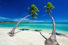 Palmen, die über grüner Lagune mit blauem Himmel in Fidschi hängen Lizenzfreie Stockfotos