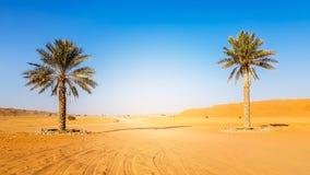 Palmen, die auf dem Gebiet der Dürre aber mit sandigem soi wachsen Lizenzfreies Stockfoto