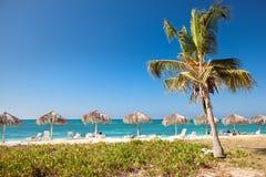 Palmen, die über einem sandigen Strand hängen Lizenzfreie Stockbilder