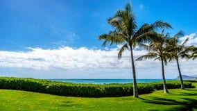 Palmen die in de wind onder blauwe hemel slingeren Stock Foto's