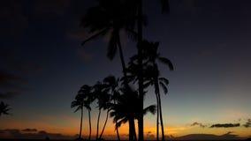 Palmen, die in den Sonnenuntergang beeinflussen stockfotografie