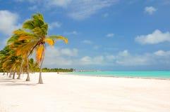 Palmen, die in die Brise beeinflussen Lizenzfreies Stockfoto