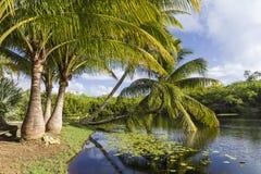 Palmen die een Onderdompeling nemen stock foto's