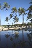 Palmen die in een zwembad worden weerspiegeld royalty-vrije stock fotografie