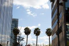 Palmen, die Gebäude zusammen binden lizenzfreie stockfotos