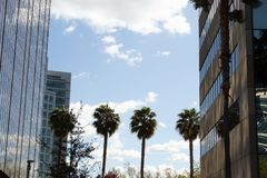Palmen die Gebouwen samenbinden royalty-vrije stock foto's