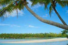 Palmen die idyllically over waterenrand leunen. Stock Afbeelding