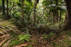 Palmen, die im tropischen Regenwald wachsen Stockbilder