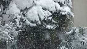 Palmen die met sneeuw worden behandeld stock video