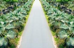 Palmen die naast de straat voeren stock fotografie