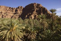 Palmen, die oben Rocky Mountain betrachten lizenzfreies stockbild