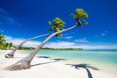 Palmen die over het overweldigen van tropische lagune hangen Stock Afbeeldingen
