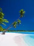 Palmen die over lagune met blauwe hemel hangen Stock Foto's