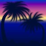 Palmen die tegen Blauwe Hemel worden gesilhouetteerd Royalty-vrije Stock Foto