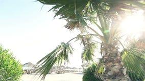 Palmen, die in Wind gegen schöne Brandung und blauen klaren Himmel auf Hintergrund beeinflussen Tropische Anlagen, die auf exotis stock video footage