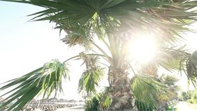 Palmen die in wind tegen mooie branding slingeren en blauwe duidelijke hemel op achtergrond Tropische installaties die op exotisc stock videobeelden