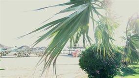 Palmen die in wind tegen mooie branding slingeren en blauwe duidelijke hemel op achtergrond Tropische installaties die op exotisc stock video