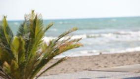 Palmen die in wind tegen mooie branding slingeren en blauwe duidelijke hemel op achtergrond Tropische installaties die op exotisc stock footage