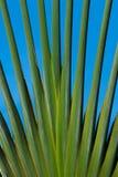 Palmen die zich uit vertakken royalty-vrije stock afbeelding
