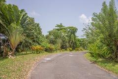 Palmen door de kant van de weg Stock Foto's