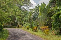 Palmen door de kant van de weg Stock Foto