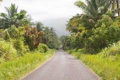 Palmen door de kant van de weg Stock Afbeeldingen