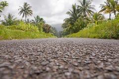 Palmen door de kant van de weg Royalty-vrije Stock Afbeeldingen