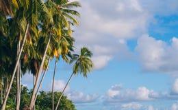 Palmen door de oceaan stock fotografie