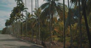 Palmen door de weg stock videobeelden